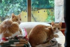 Jonesy y Selina