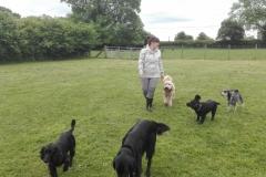 Paseando perros en Inglaterra