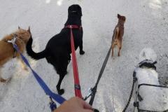 Bilbo, Neska, Pyros y Trasto paseando